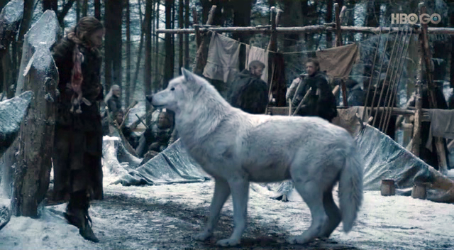 ghost-dire-wolf-game-of-thrones