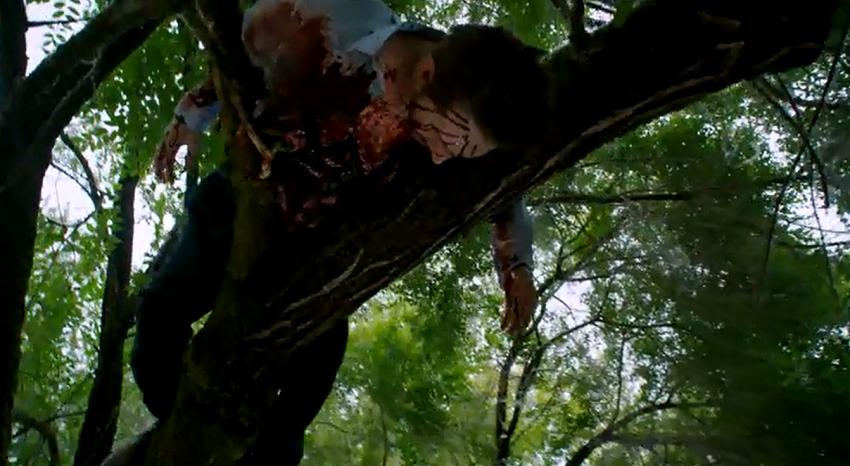 303-Dead_in_tree